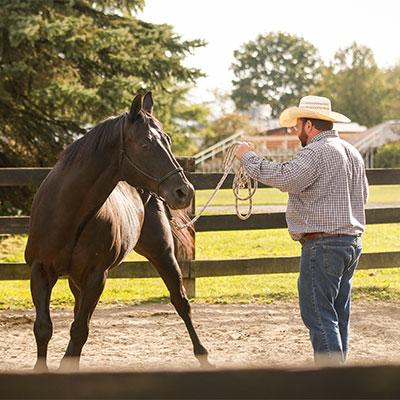 Horse Handlers