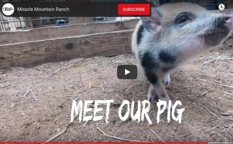 Meet the Pig